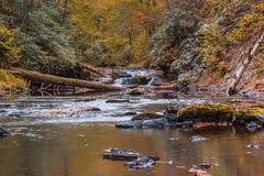 Scène de rivière dans la forêt entourée par le feuillage d'automne Image stock