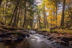 Scène de rivière dans la forêt dans l'automne Photographie stock libre de droits
