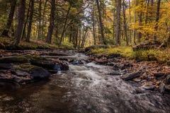 Scène de rivière dans la forêt dans l'automne Photo libre de droits