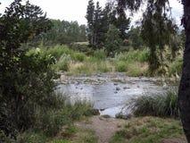 Scène de rivière de Tongariro au Nouvelle-Zélande Photographie stock
