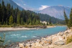Scène de rivière des Rocheuses Photographie stock libre de droits