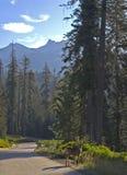 Scène de stationnement national de séquoia Photo libre de droits