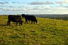 Scène de terre, Uruguay Images stock
