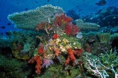 Scène douce de récif coralien photo libre de droits
