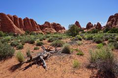 Scène en pierre rouge de désert avec les formations de roche et l'arbre mort Photographie stock libre de droits