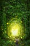 Scène fantastique d'arbres - tunnel de l'amour avec la quirlande électrique Photographie stock libre de droits