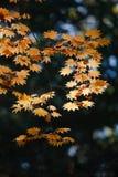 Scène florale 7 Images stock