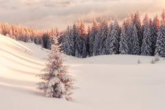 Scène hivernale dramatique avec les arbres neigeux Photos stock
