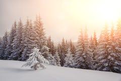Scène hivernale dramatique avec les arbres neigeux Image libre de droits