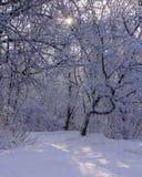 Scène idyllique d'hiver dans les bois avec le soleil brillant par les arbres sur la terre couverte par neige photographie stock