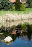 Scène idyllique - pierre brillante dans le lac Photos libres de droits
