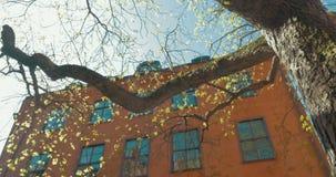 Scène met boom en oud huis stock video
