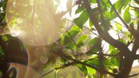 Scène met natte boom en zongloed stock video