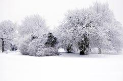 Scène morne de neige de l'hiver Photographie stock libre de droits