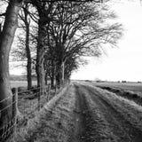 Scène noire et blanche de paysage Images libres de droits
