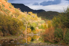 Scène orageuse de désert de Creekside Photos libres de droits