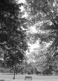 Scène paisible de banc solitaire en parc Photos stock