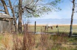 Scène pastorale Photo libre de droits