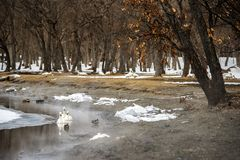 Scène renversante d'hiver dans le lac Kusharo, Hokkaiddo image stock