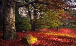 Scène rouge d'automne Photos stock