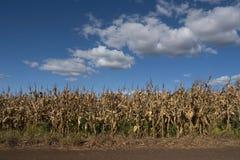 Scène rurale Image libre de droits