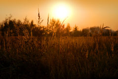 Scène rurale - coucher du soleil d'été Photo stock