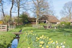 Scène rurale hollandaise avec la ferme et les chèvres Image libre de droits