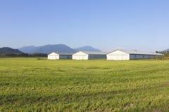 Scène rurale pastorale Image libre de droits