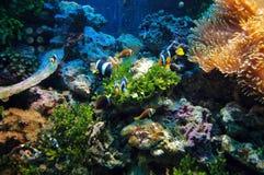Scène sous-marine photo libre de droits
