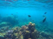 Scène sous-marine avec les animaux marins Coraux et poissons exotiques de bord de la mer Photos stock