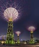 Scène superbe de nuit d'arbres aux jardins de Singapour par la baie Photos stock