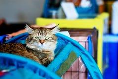 Scène sur l'exposition de chat Photographie stock libre de droits