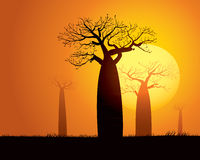 Scène tranquille de coucher du soleil au Madagascar Images libres de droits