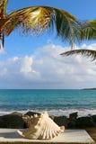 Scène tropicale Image libre de droits