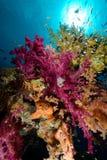 Scène tropicale colorée de récif avec les coraux floraux Images libres de droits