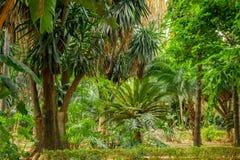 Scène tropicale de jardin photos libres de droits