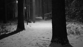 Scène van de het landschaps de zwart-witte nacht van de de winternacht met dalende sneeuw in het verlaten nachtpark stock videobeelden