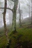 Scène van het binnenland van een bos onder de mist Royalty-vrije Stock Foto