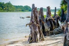 Scènes de nature autour d'île la Caroline du Sud de chasse Images stock