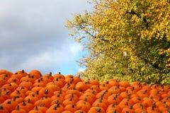 Scènes van Halloween Stock Fotografie