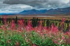 Scénique d'Alaska Image libre de droits