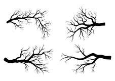 Scénographie nue d'hiver de branche d'isolement sur le fond blanc illustration de vecteur