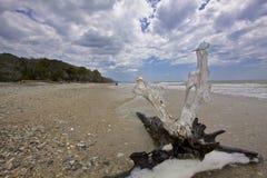 SC пляжа Boneyard плантации залива ботаники Стоковое Изображение RF