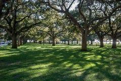 Sc bianco di Charleston del giardino del punto Immagini Stock