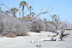 Sc Boneyard dell'isola del toro Fotografie Stock Libere da Diritti