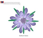 Scabiosa Comosa Flower, The National Flower of Mongolia Stock Photo
