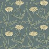 Scabiosa flower pattern Stock Image