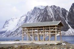 Scaffali di legno sulla riviera per l'essiccamento del merluzzo nell'inverno Paesino di pescatori di Reine, isole di Lofoten fotografia stock libera da diritti