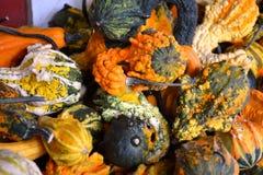 Scaffali impilati con le zucche festive di caduta Immagine Stock