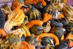 Scaffali impilati con le zucche festive di caduta Fotografie Stock Libere da Diritti